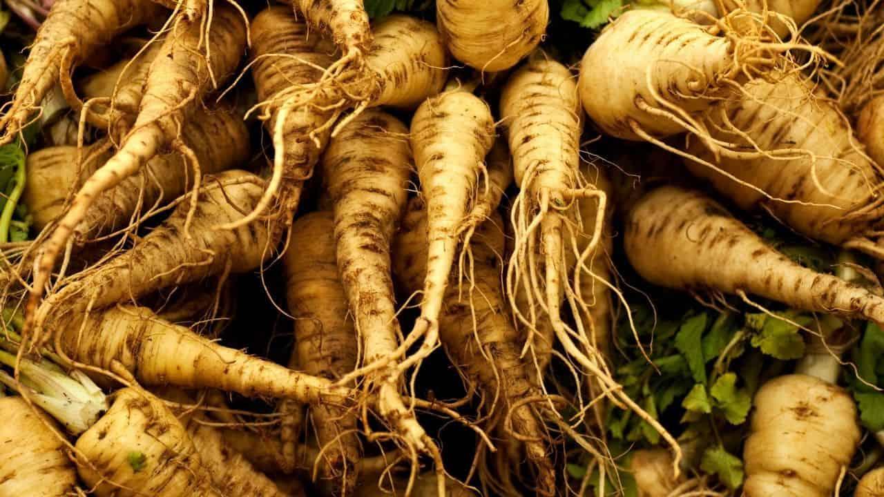 11 Vegetables Grown Underground 6