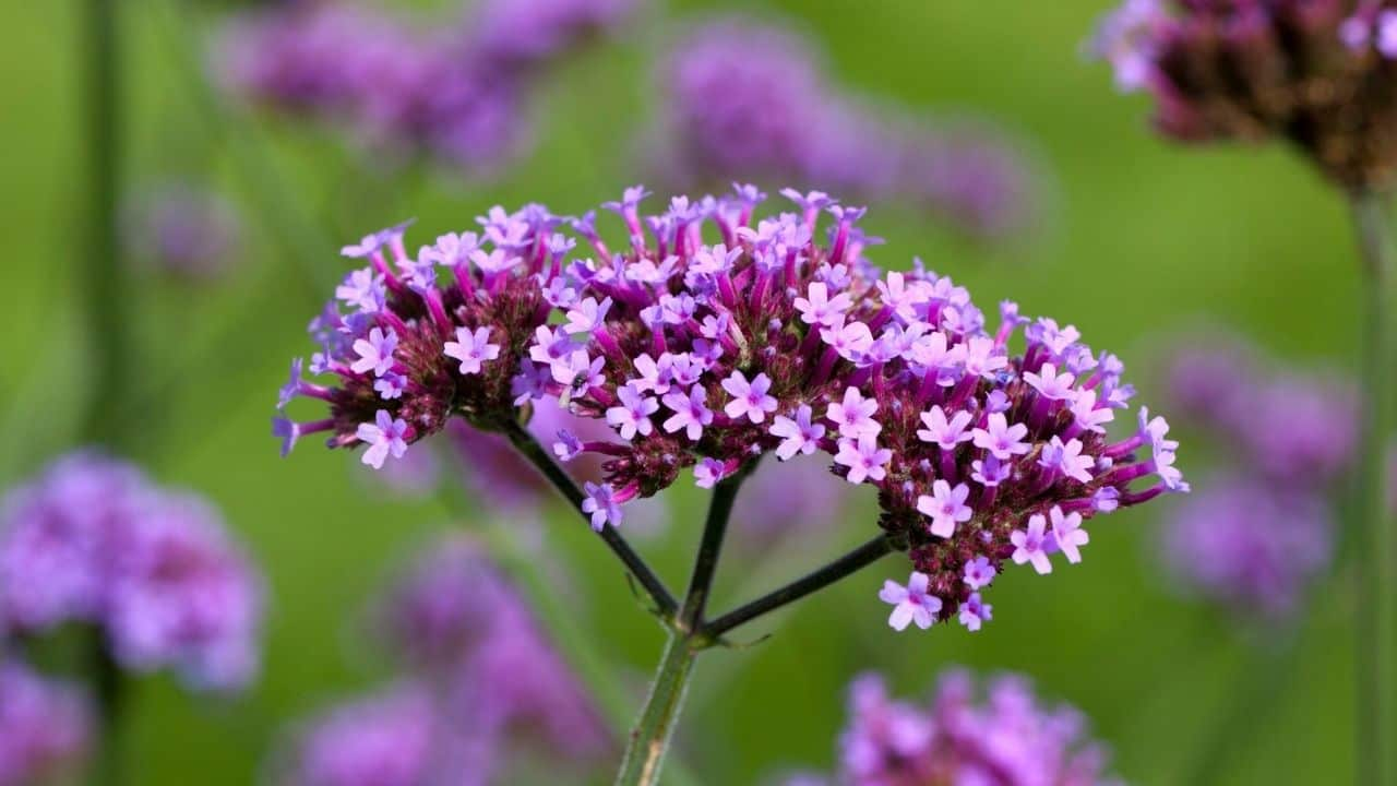 15 Best Plants for West Facing Gardens – Enjoy the Afternoon Sun! 1