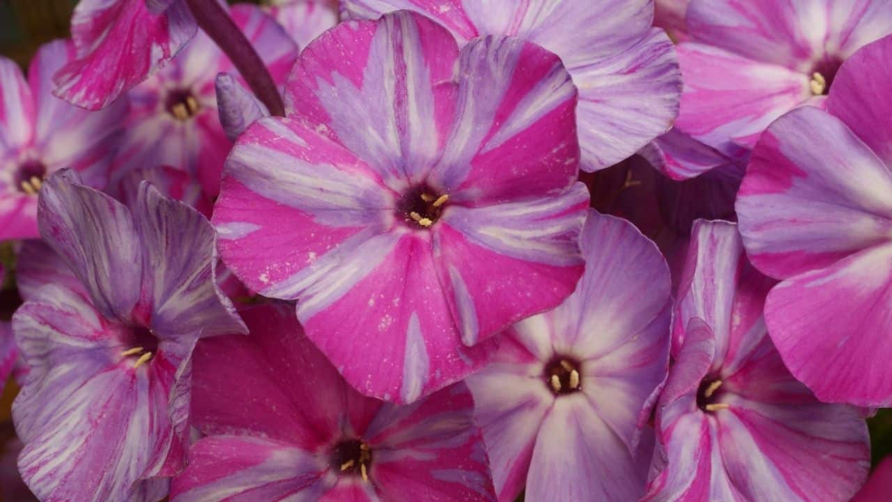 15 Best Plants for West Facing Gardens – Enjoy the Afternoon Sun! 2