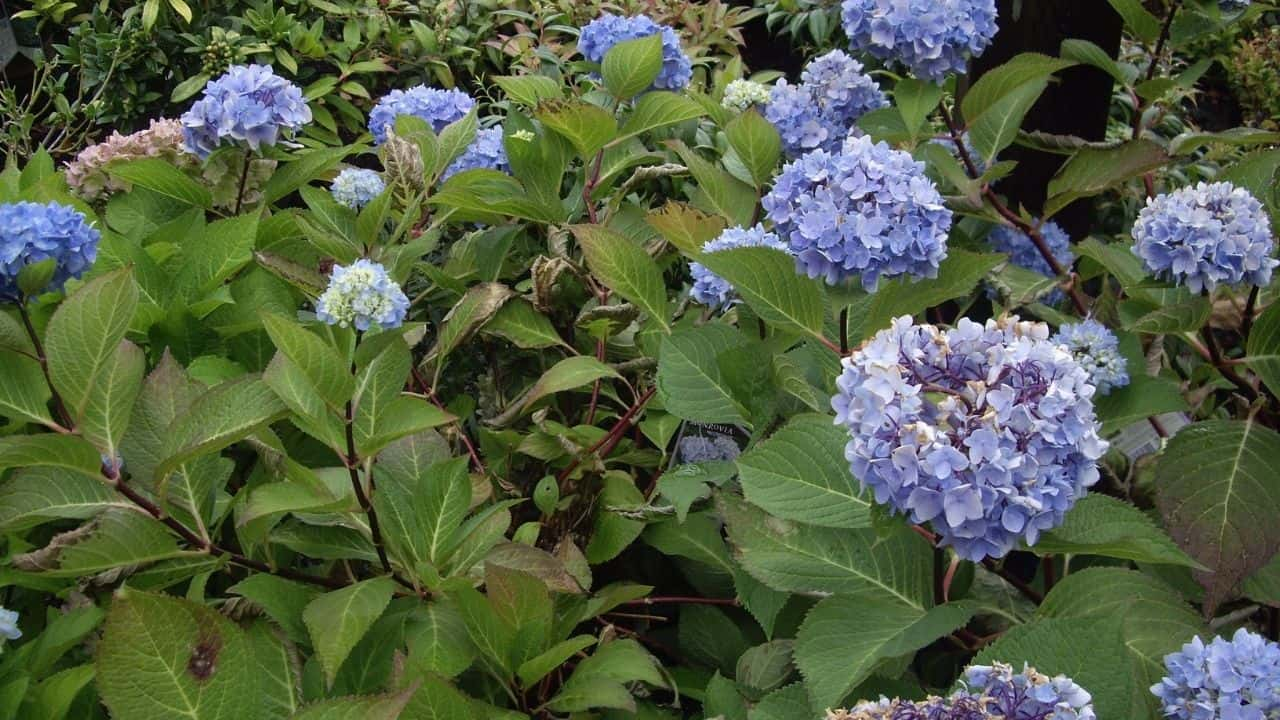 14 Best Plants for East Facing Gardens: Nr. 2 Is Our Favorite! 6