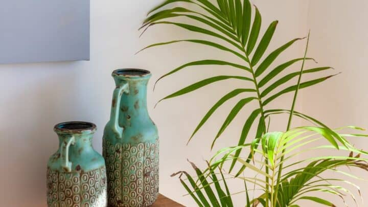 How Often To A Water Majesty Palm – What To Know!