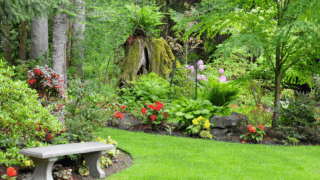 Best Fertilizer for Outdoor Growth - A Buyers Guide
