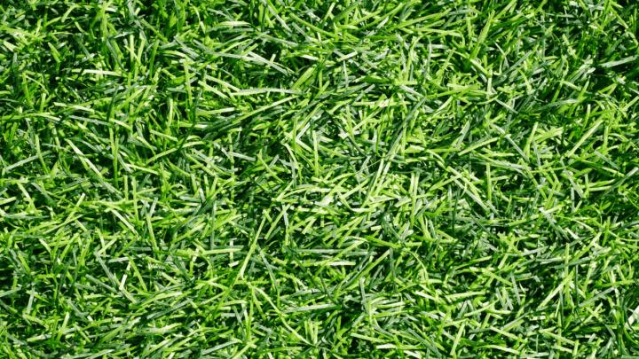6 Best Fertilizers for Bermuda Grass – A Buyers Guide