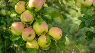 Best Fertilizers for Fruit Trees