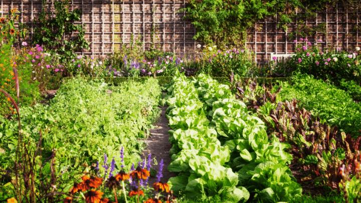 9 Best Fertilizers for Garden – A Buyers Guide