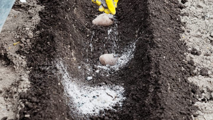 8 Best Fertilizers for Potatoes – A Buyers Guide