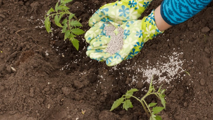 6 Best Fertilizers for Tomatoes – A Buyers Guide