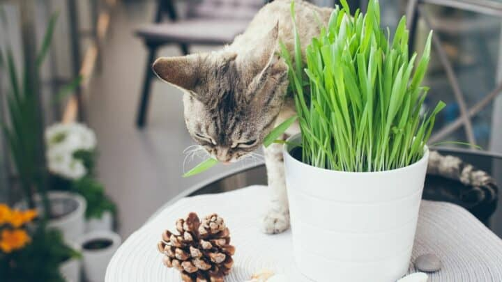 How to Grow Cat Grass without Soil — Let's See!