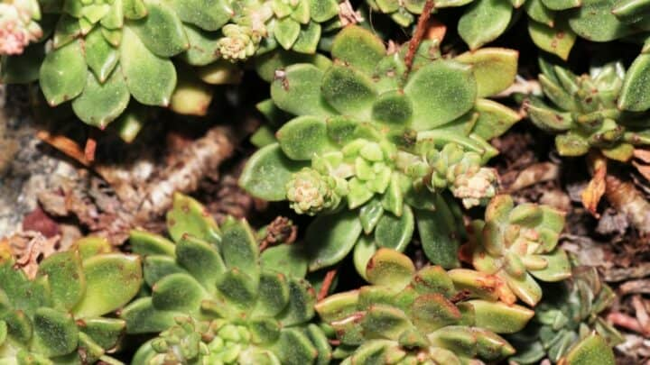 Can Succulents Survive the Cold? Well…