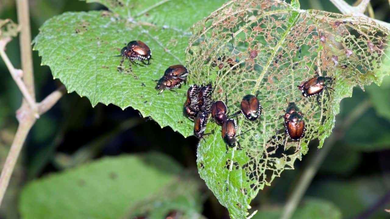 Insect Eggs On Leaves — Whose Are They? 7