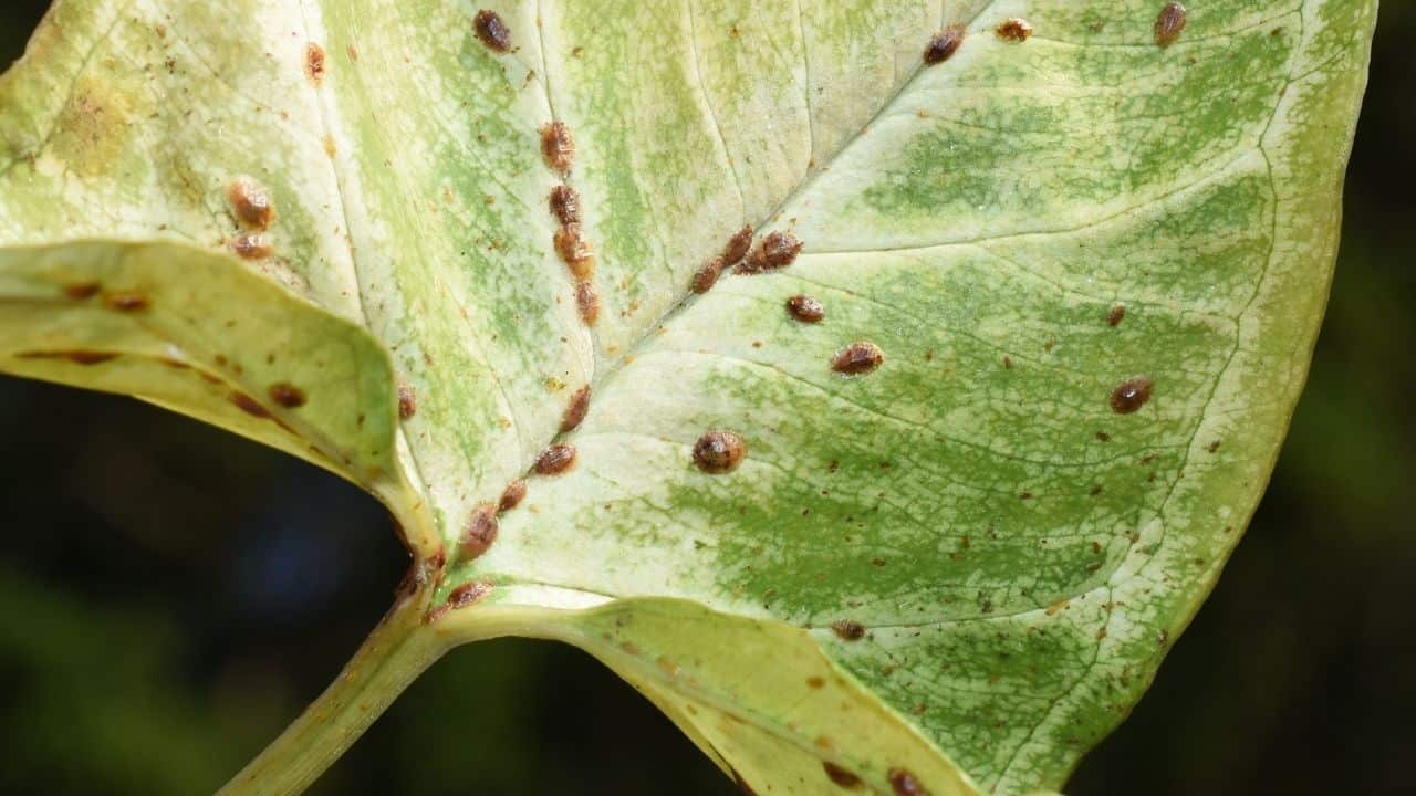 Insect Eggs On Leaves — Whose Are They? 10