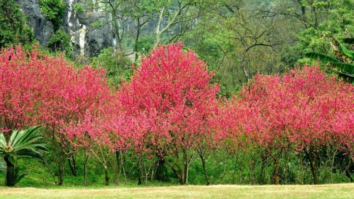6 Best Fertilizers for Peach Trees — A Buyers Guide