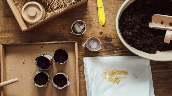 How to Germinate Tomato Seeds Using a Paper Towel