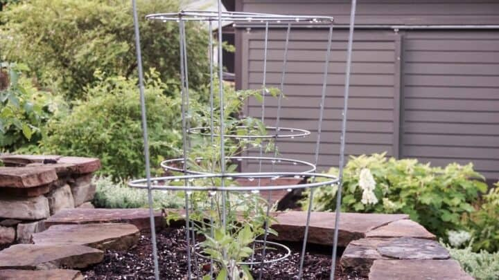 How To Use Tomato Cages – Pro Tips!