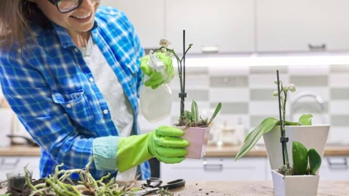 How To Grow Orchids From Cuttings? The Answer