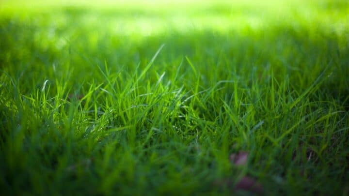 How To Plant Grass Seeds On Hard Dirt The Nifty Way