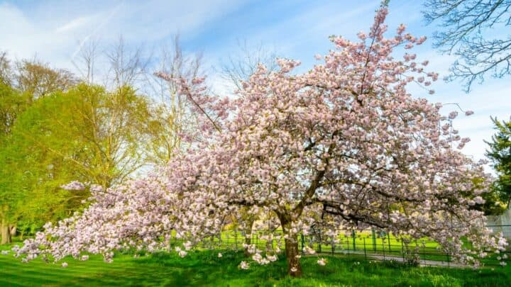 How to Grow a Magnolia Tree — The Complete Guide