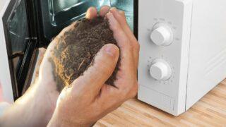 Sterilize Soil in the Microwave