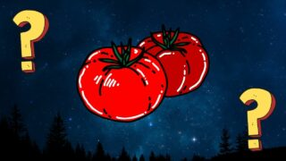 What is Eating My Tomato Plants at Night (1)