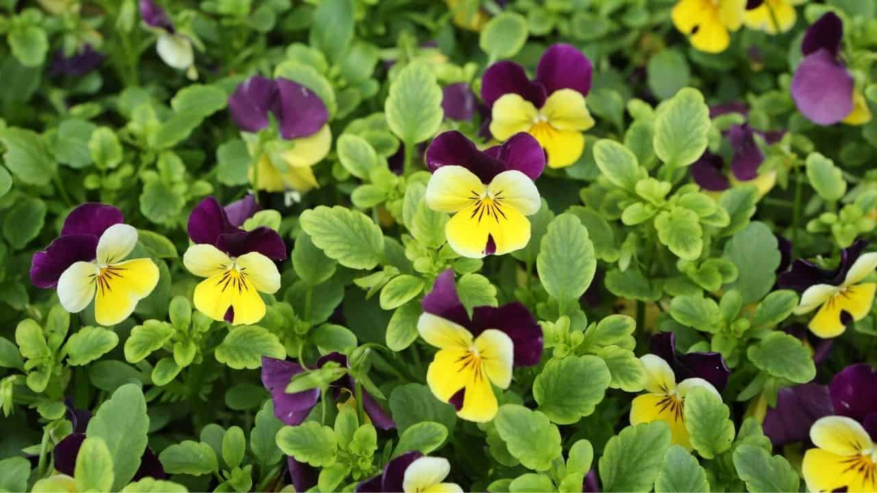What To Plant In January — 15 Best Plants 11