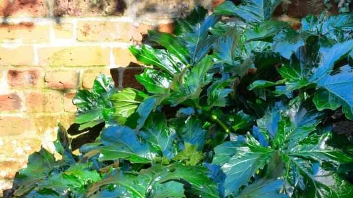 What Is Eating My Rhubarb Leaves?  — Culprits Revealed!