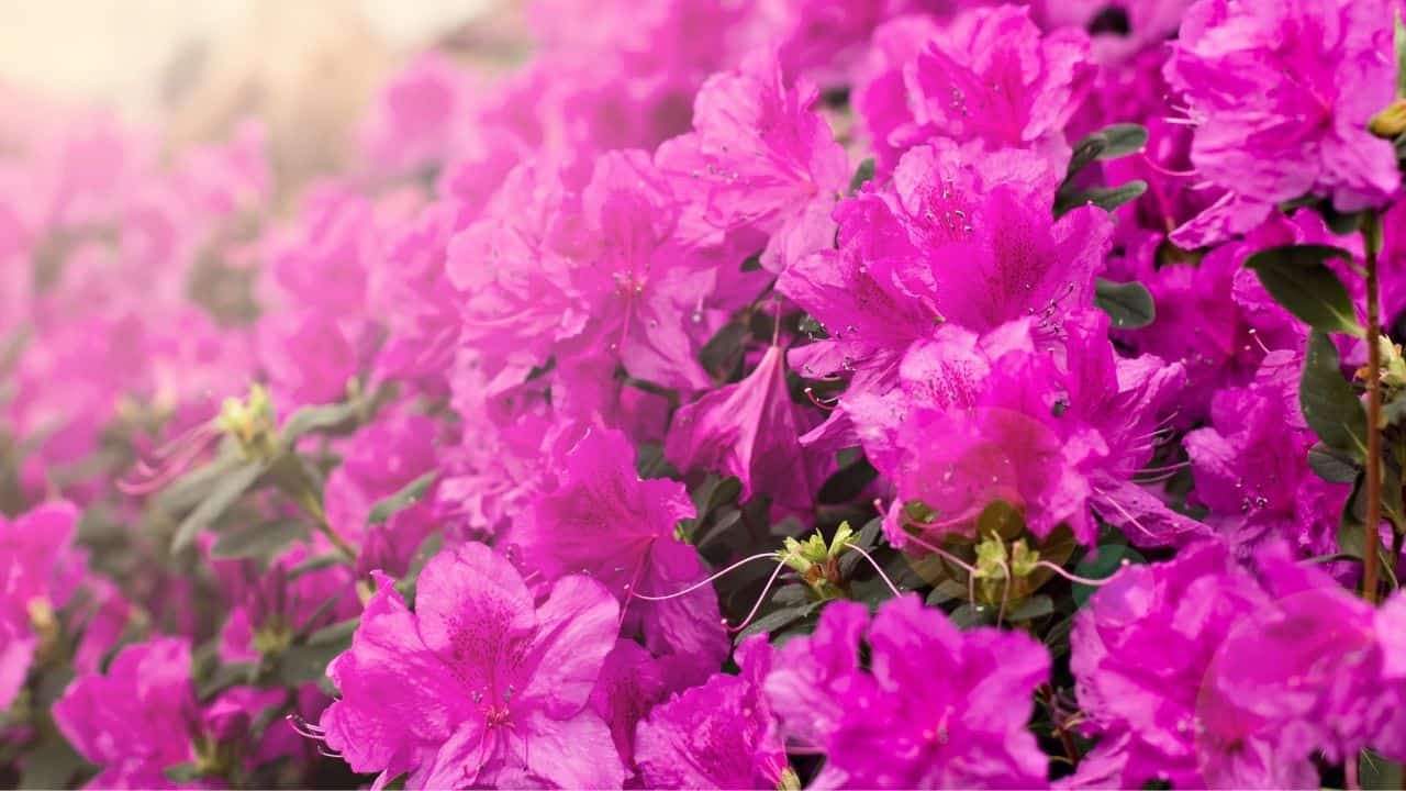 What To Grow In March — 13 Stunning Plants 9