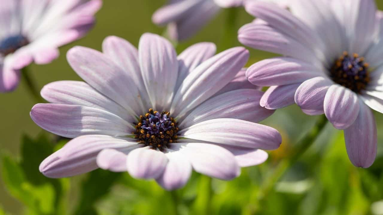 What To Grow In March — 13 Stunning Plants 11