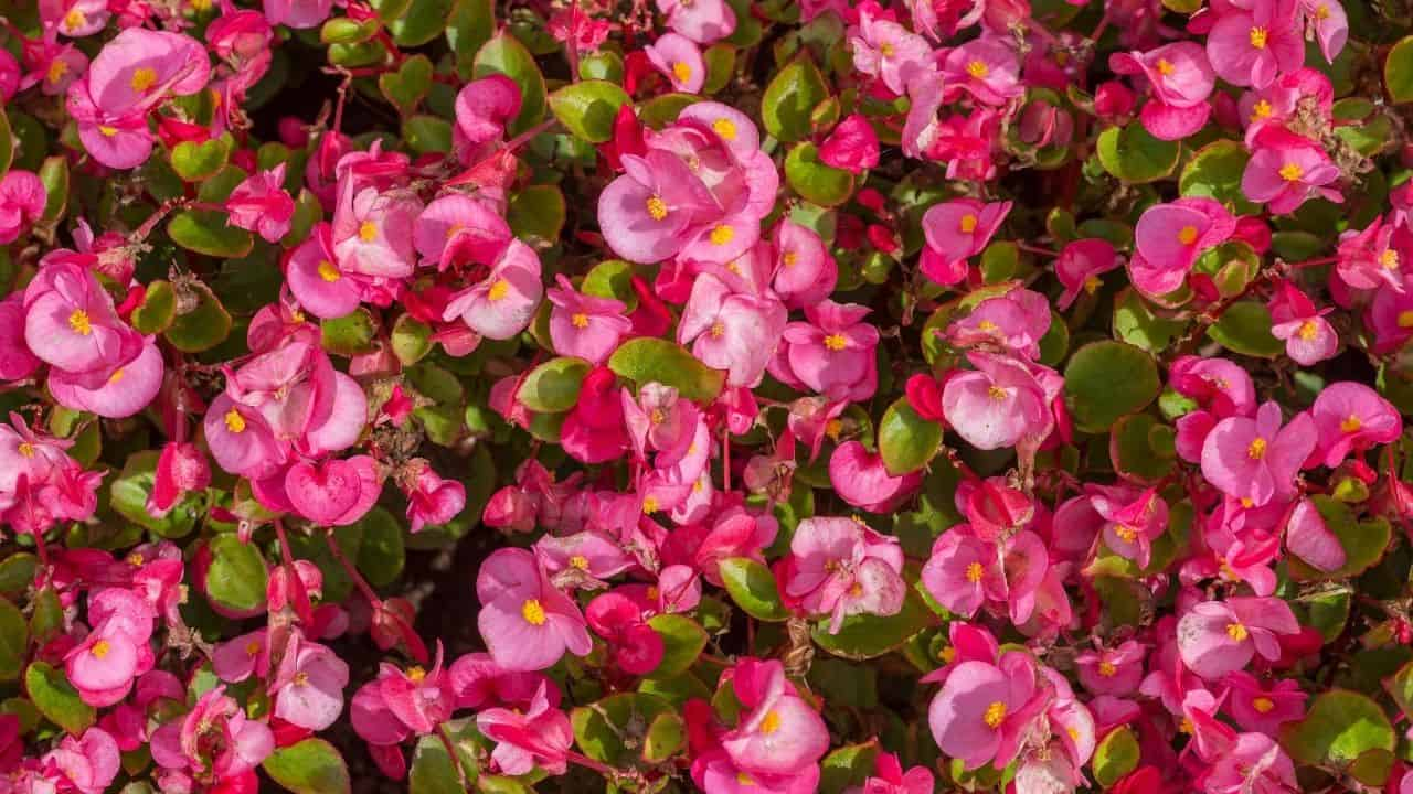 What To Grow In March — 13 Stunning Plants 13