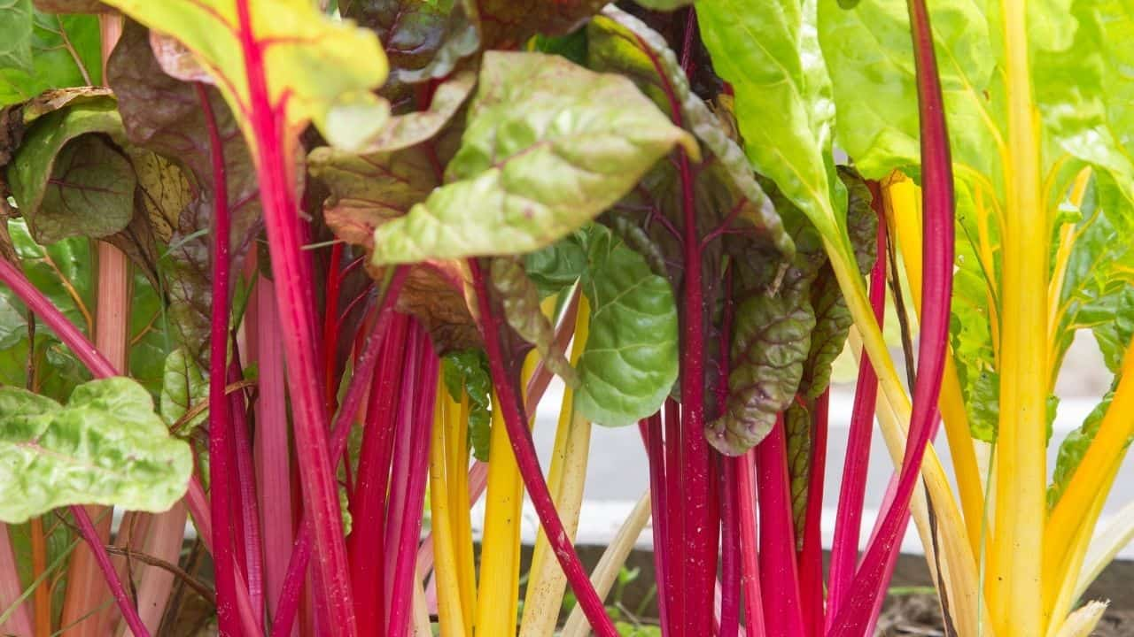 What To Grow In February — 17 Plants To Choose From 10