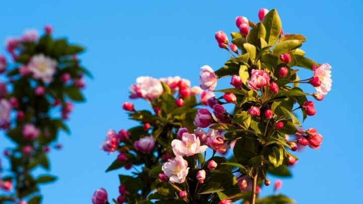 Begonia Stem Rot —  Identification, Treatment, Prevention