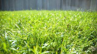 Bermuda Grass Sun Requirements
