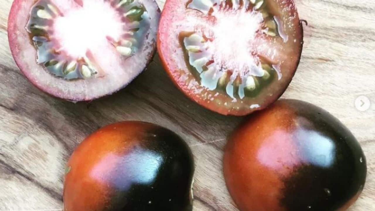 Blue Chocolate Tomato