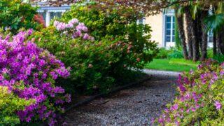 Fertilizer for Garden in Spring
