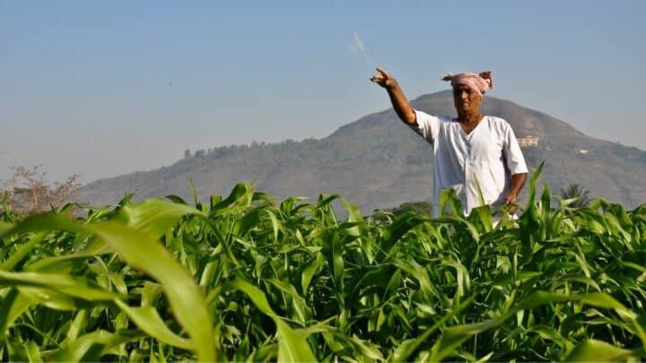 7 Best Corn Fertilizers – A Buyers Guide