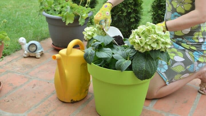 8 Best Fertilizers for Flowers – A Buyers Guide