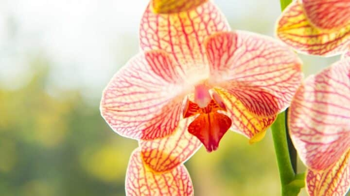 How to Plant Orchid Bulbs In 9 Nifty Steps