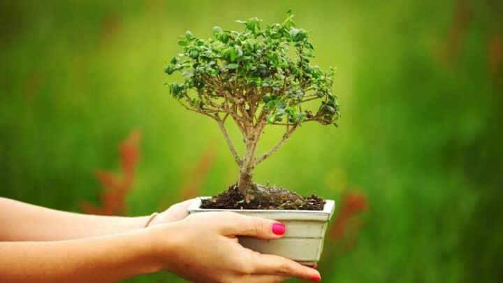 Growing a Bonsai — How Long Does It Take?