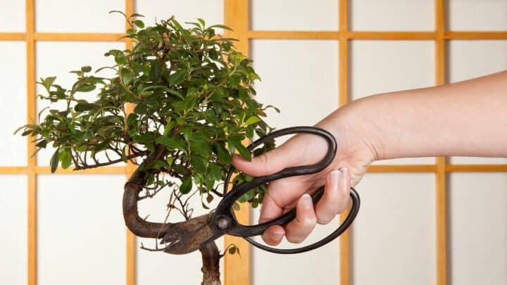 How to Grow a Bonsai from a Cutting — Like a Pro