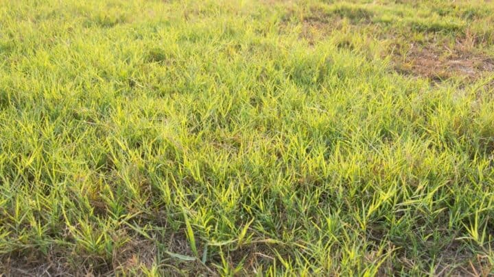 How to Keep Weeds out of Bermuda Grass — Complete Guide