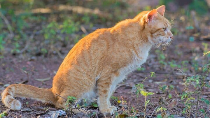 How to Neutralize Cat Urine in Soil — Step-by-step Guide
