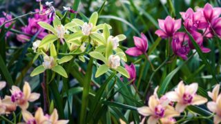 Kinds Of Orchids
