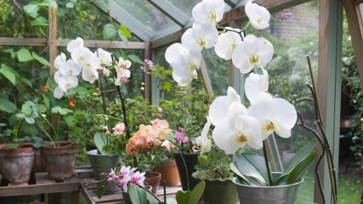 How To Build An Orchid Greenhouse In 6 Easy Steps
