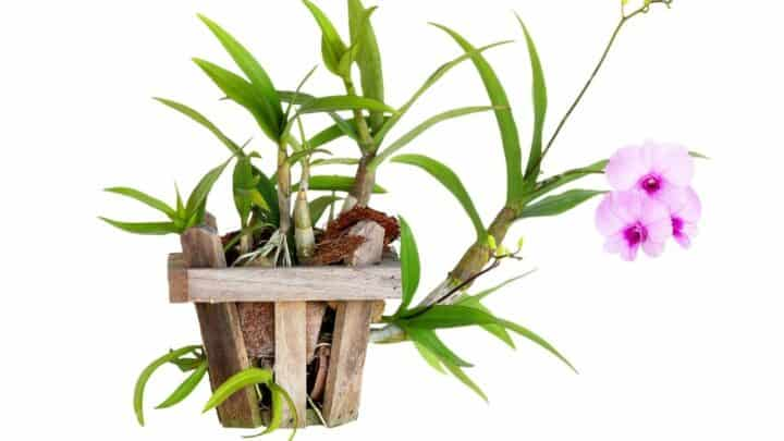 Why Do Orchid Pots Have Holes? Ooh!