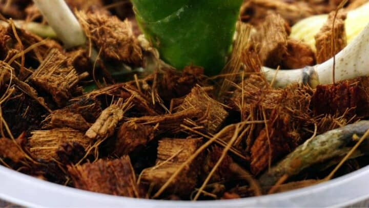 How To Make Orchid Potting Mix With These Steps