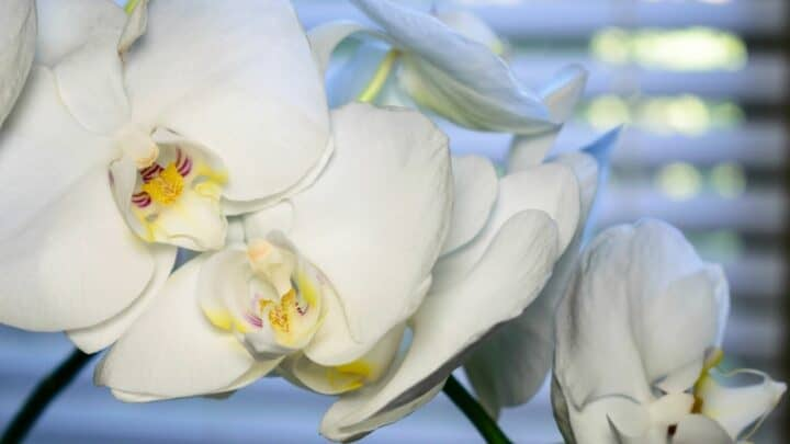 6 Tips How To Make An Orchid Grow A New Spike
