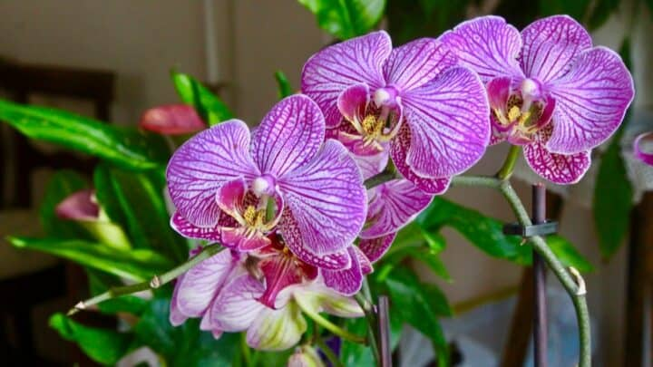 How To Make An Orchid Humidity Tray The DIY Way!