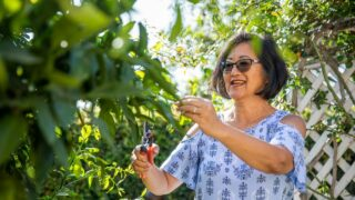 Pruning Citrus Tree