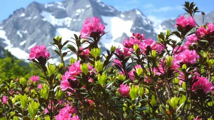 The 6 Best Plants to Plant under Rhododendrons — Revealed