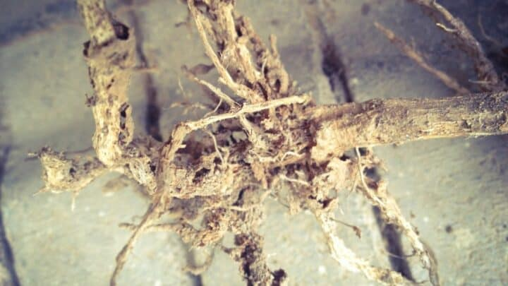 How to Save a Plant from Root Rot — Top Tips