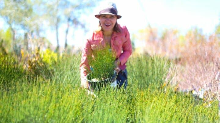 Spanish Broom Plant (Spartium) — Best Care Tips